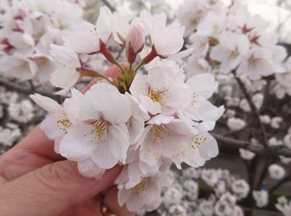 花の向こうにサムネイル
