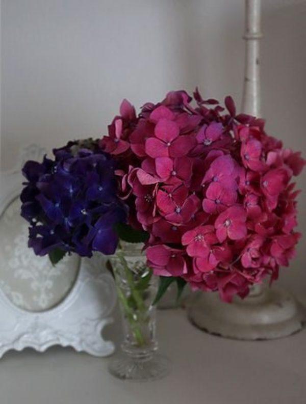 紫陽花サムネイル