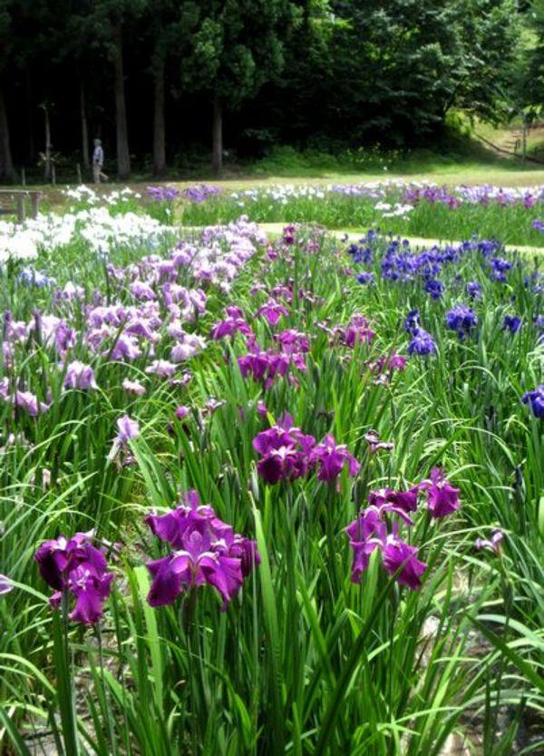 夏至のお花見サムネイル