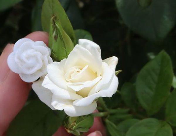 夏の名残の白サムネイル