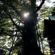 大木参りサムネイル