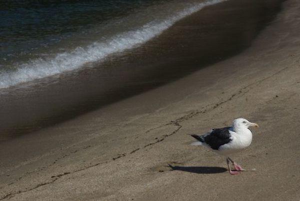 海洋療法サムネイル